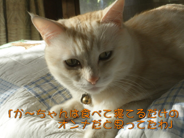 Pc080536